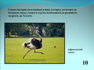 Самая быстрая нелетающая птица, которая, несмотря на большую массу, может в с