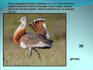 Книга рекордов Гиннеса заявила, что эта птица является самой тяжелой из всех