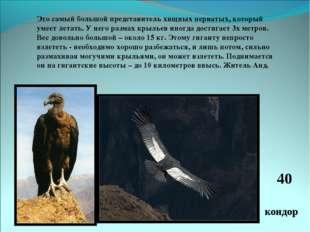Это самый большой представитель хищных пернатых, который умеет летать. У него