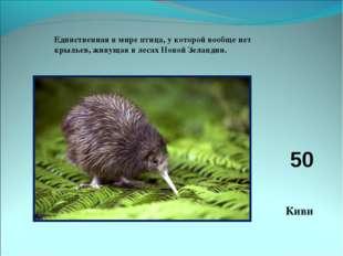 Единственная в мире птица, у которой вообще нет крыльев, живущая в лесах Ново