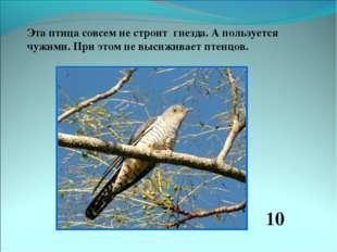 Эта птица совсем не строит гнезда. А пользуется чужими. При этом не высиживае
