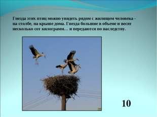 Гнезда этих птиц можно увидеть рядом с жилищем человека - на столбе, на крыше