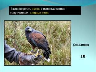 Разновидностьохотыс использованием прирученных хищных птиц. 10 Соколиная