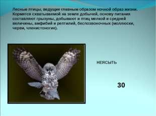 Лесные птицы, ведущие главным образом ночной образ жизни. Кормятся схватываем