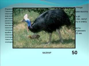 Издание 2004 годаКниги рекордов Гиннесаприводит эту птицу, как самую опасну