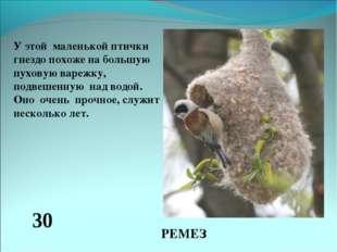 У этой маленькой птички гнездо похоже на большую пуховую варежку, подвешенную