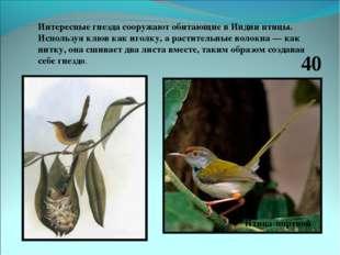 Интересные гнезда сооружают обитающие в Индии птицы. Используя клюв как иголк