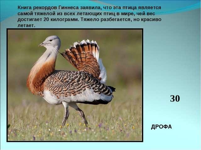Книга рекордов Гиннеса заявила, что эта птица является самой тяжелой из всех...