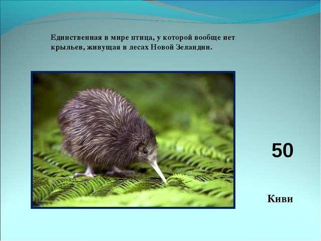 Единственная в мире птица, у которой вообще нет крыльев, живущая в лесах Ново...