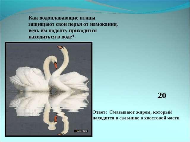 Как водоплавающие птицы защищают свои перья от намокания, ведь им подолгу при...