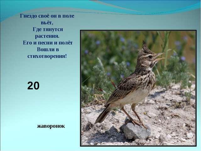 жаворонок Гнездо своё он в поле вьёт, Где тянутся растения. Его и песни и пол...