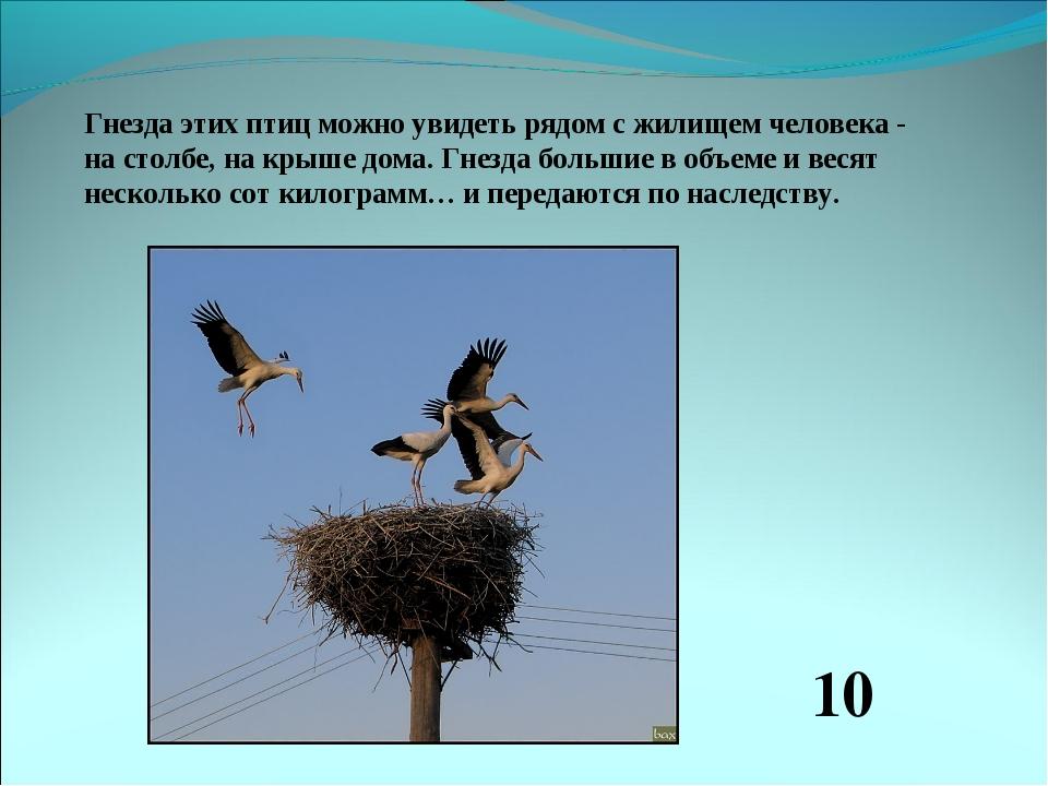 Гнезда этих птиц можно увидеть рядом с жилищем человека - на столбе, на крыше...