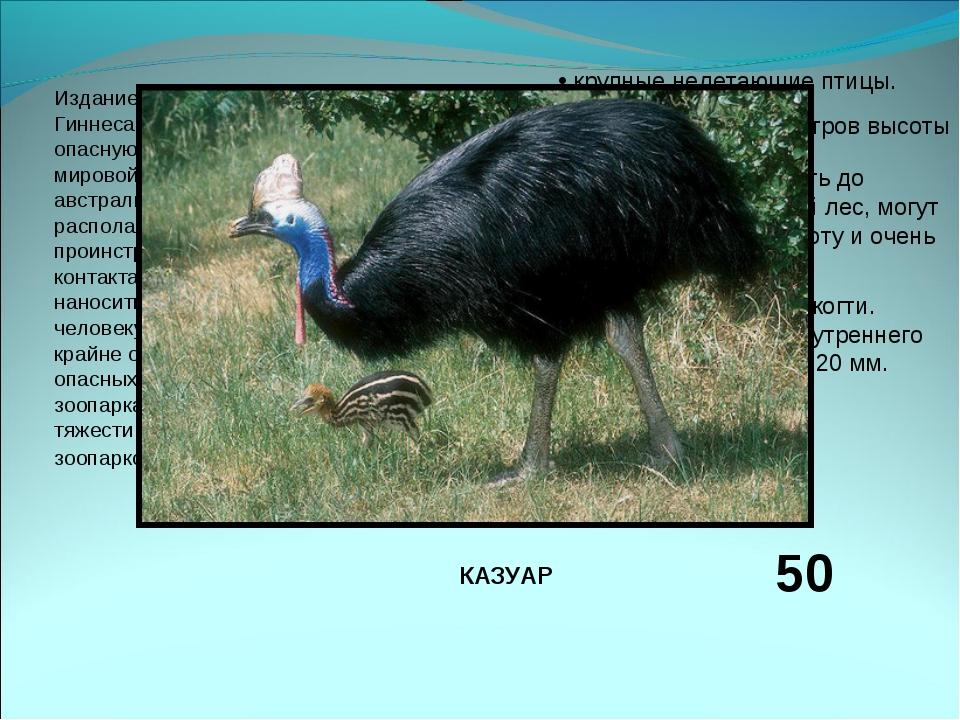 Издание 2004 годаКниги рекордов Гиннесаприводит эту птицу, как самую опасну...