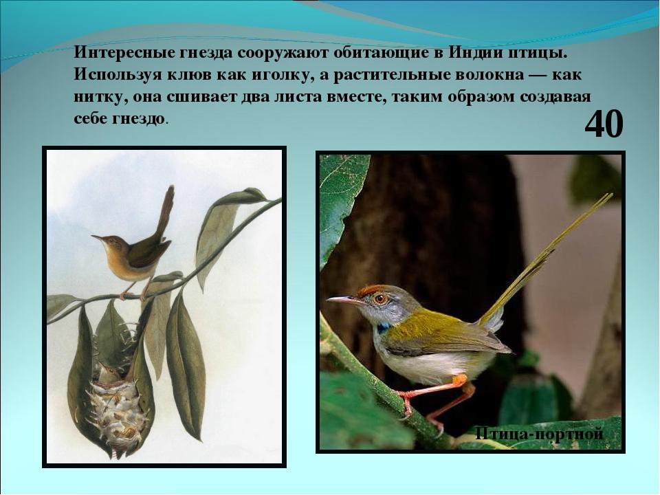 Интересные гнезда сооружают обитающие в Индии птицы. Используя клюв как иголк...