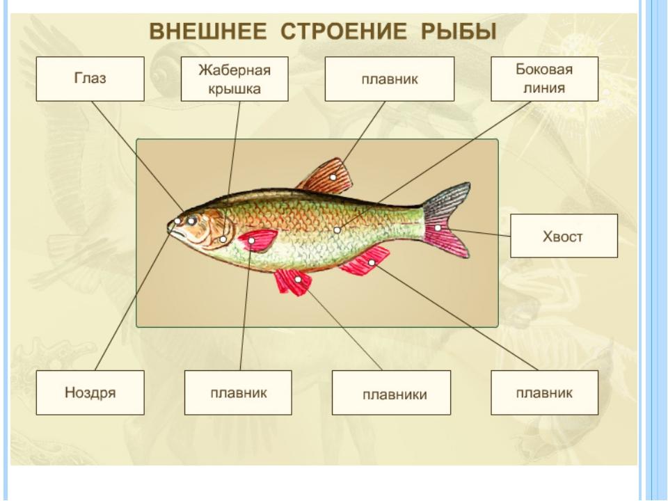 golie-naturshitsi-dlya-hudozhnikov-foto