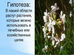 Гипотеза: В нашей области растут растения, которые можно использовать в лечеб