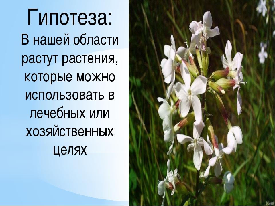 Гипотеза: В нашей области растут растения, которые можно использовать в лечеб...
