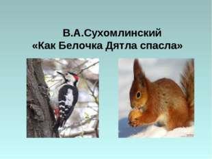 В.А.Сухомлинский «Как Белочка Дятла спасла»