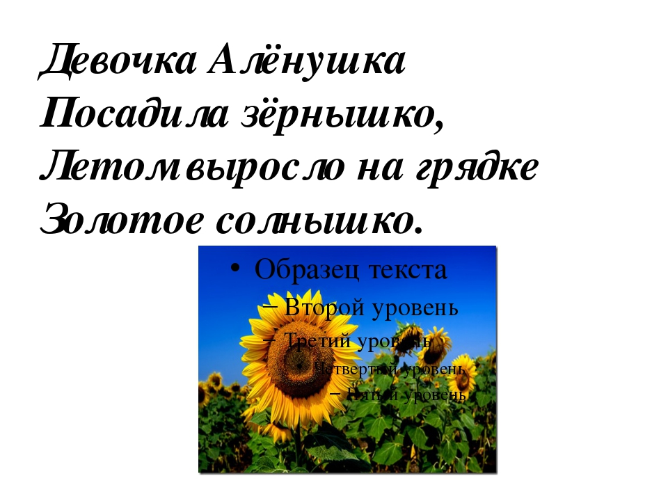 Девочка Алёнушка Посадила зёрнышко, Летом выросло на грядке Золотое солнышко.