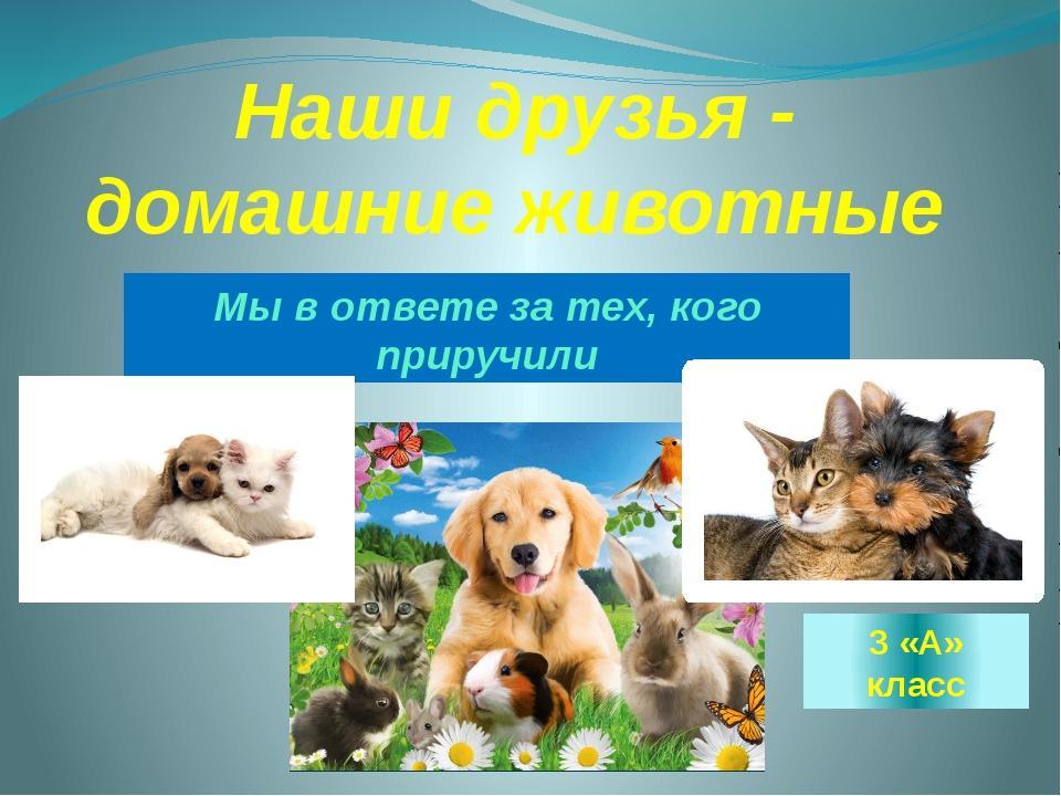 Наши друзья - домашние животные Мы в ответе за тех, кого приручили 3 «А» класс