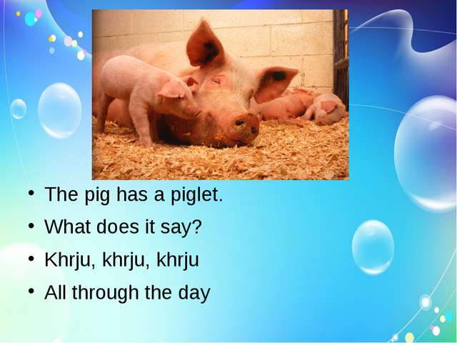 The pig has a piglet. What does it say? Khrju, khrju, khrju All through the...