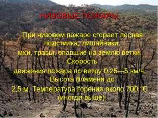 НИЗОВЫЕ ПОЖАРЫ При низовом пожаре сгорает лесная подстилка, лишайники, мхи, т