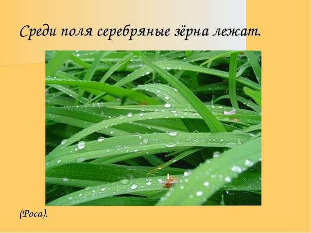 Среди поля серебряные зёрна лежат. (Роса).