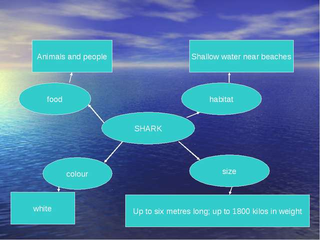 SHARK food habitat colour size Animals and people white Up to six metres long...