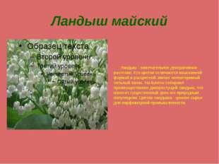Ландыш майский Ландыш - замечательное декоративное растение. Его цветки отлич