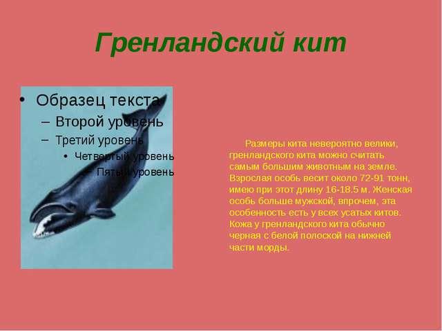 Гренландский кит Размеры кита невероятно велики, гренландского кита можно счи...