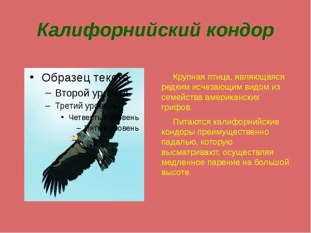 Калифорнийский кондор Крупная птица, являющаяся редким исчезающим видом из се...