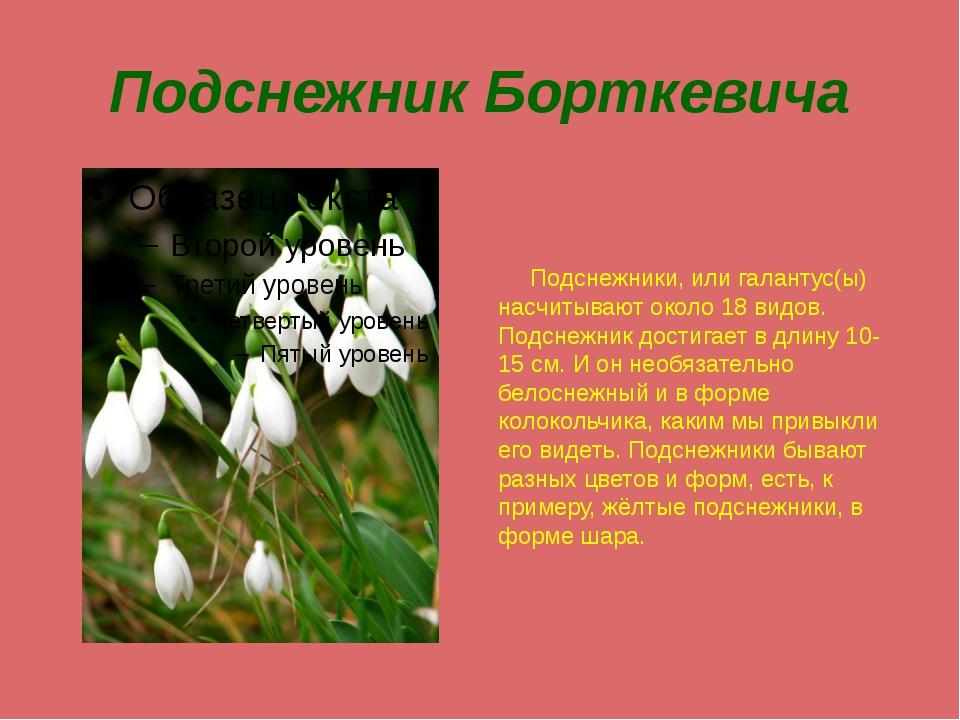 Подснежник Борткевича Подснежники, или галантус(ы) насчитывают около 18 видов...