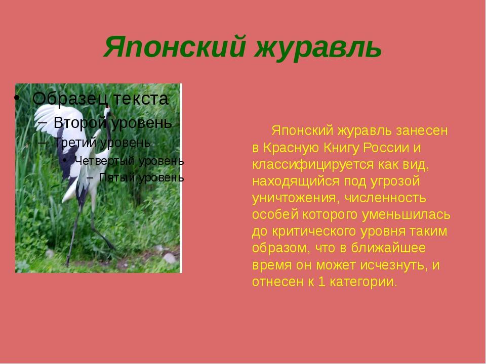 Японский журавль Японский журавль занесен в Красную Книгу России и классифици...