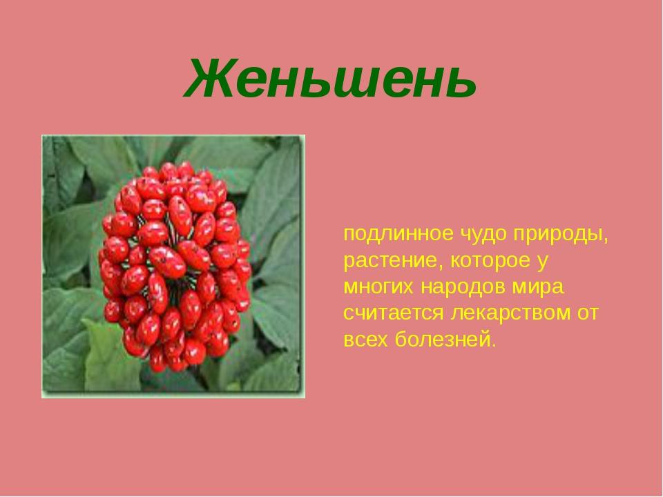 Женьшень подлинное чудо природы, растение, которое у многих народов мира счит...