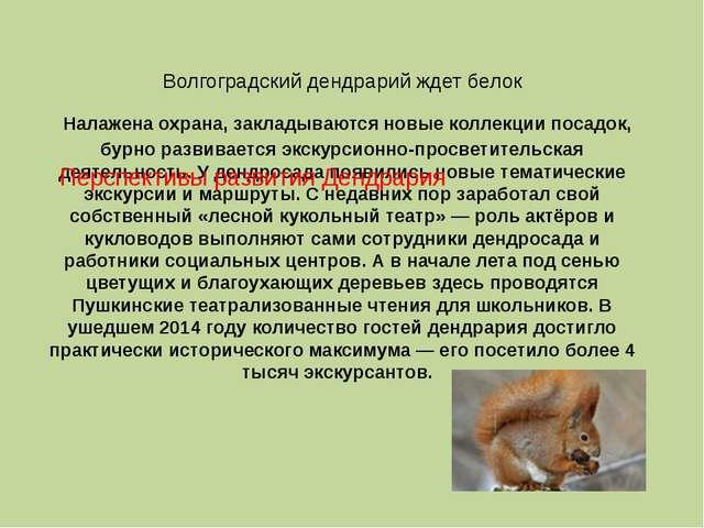 Волгоградский дендрарий ждет белок Налажена охрана, закладываются новые колле...