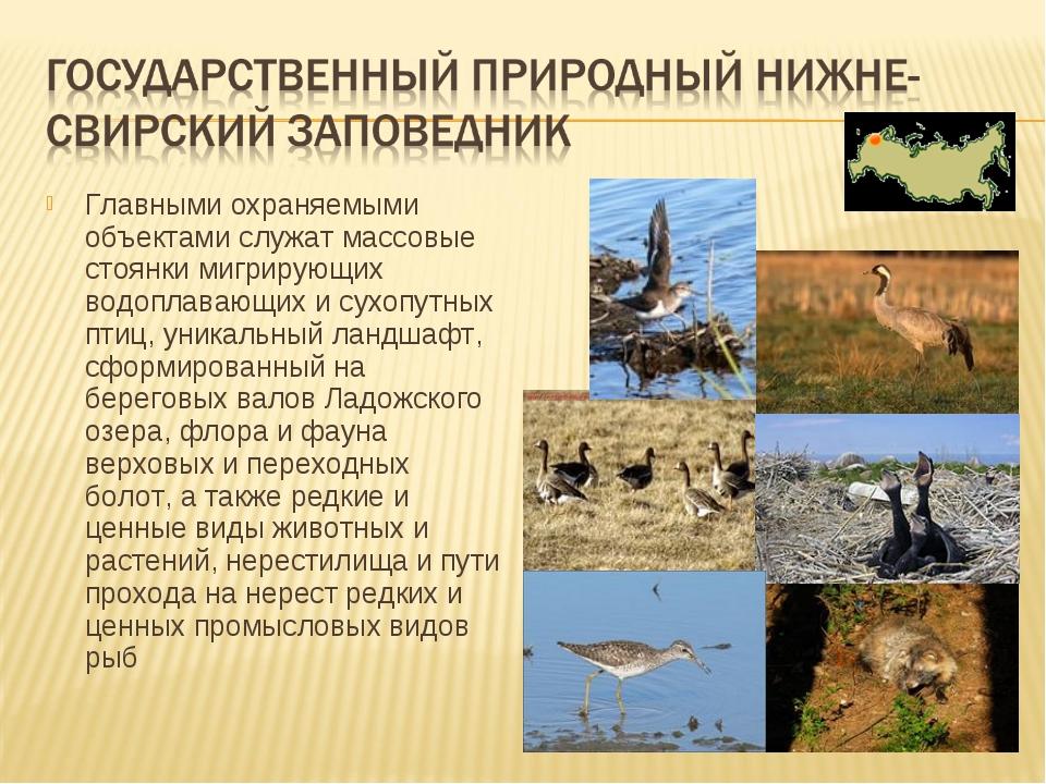 Главными охраняемыми объектами служат массовые стоянки мигрирующих водоплаваю...