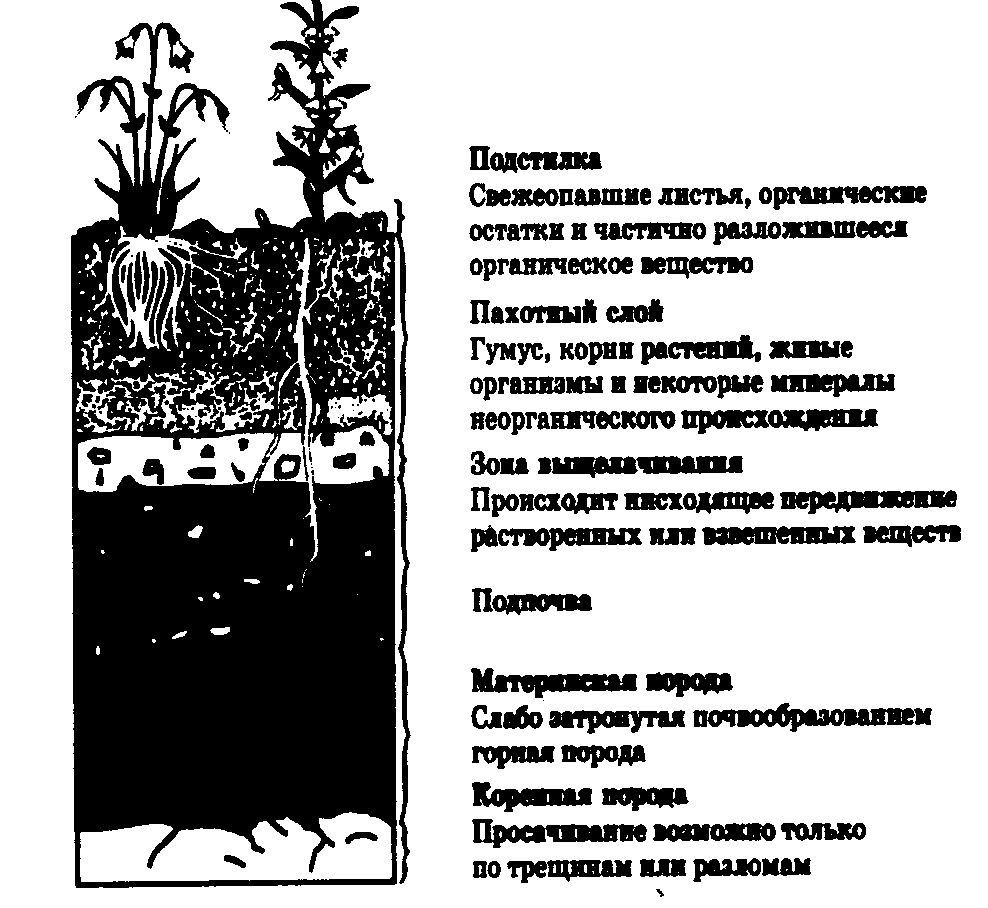 адаптация сельскохозяйственных животных презентация