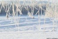 http://vershen.ru/up/13062011/5.jpg