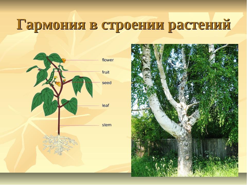 Гармония в строении растений