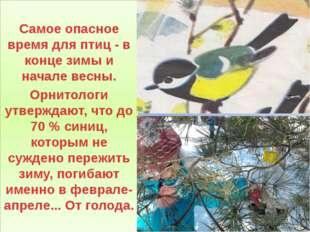Самое опасное время для птиц - в конце зимы и начале весны. Орнитологи утвер