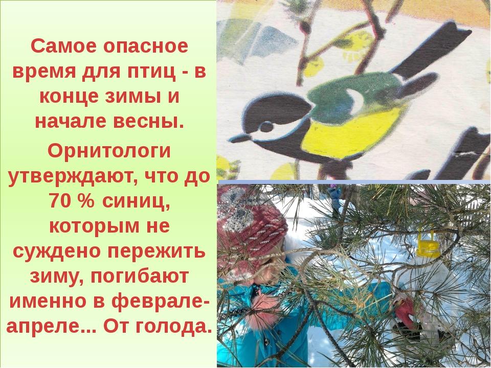 Самое опасное время для птиц - в конце зимы и начале весны. Орнитологи утвер...