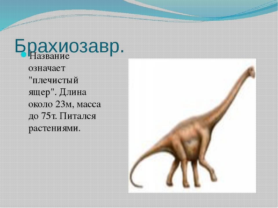 """Брахиозавр. Название означает """"плечистый ящер"""". Длина около 23м, масса до 75т..."""