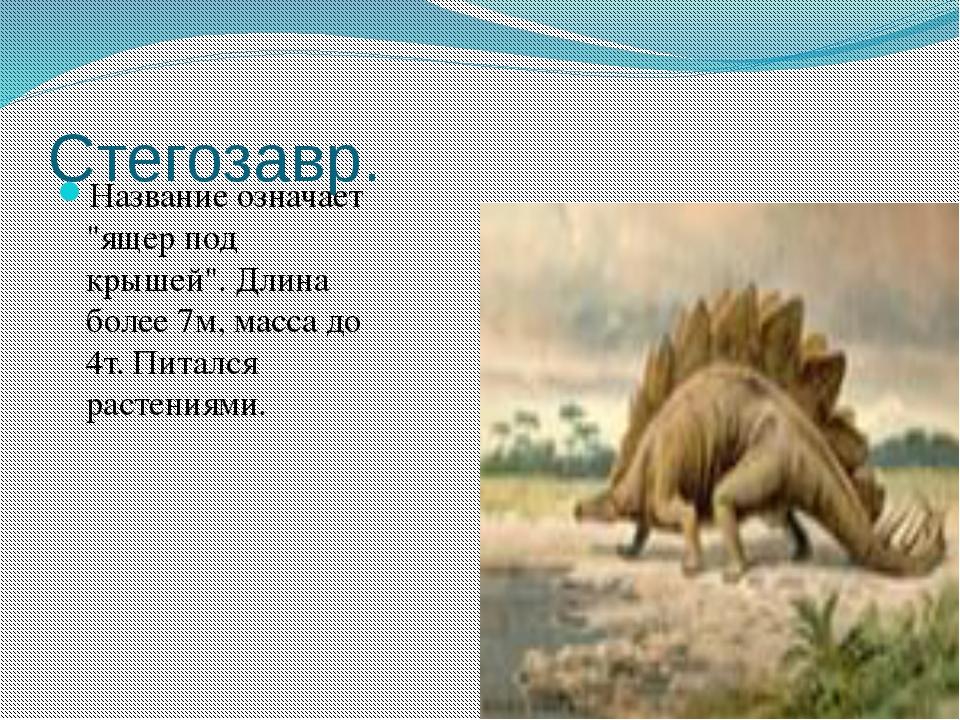 """Стегозавр. Название означает """"ящер под крышей"""". Длина более 7м, масса до 4т...."""