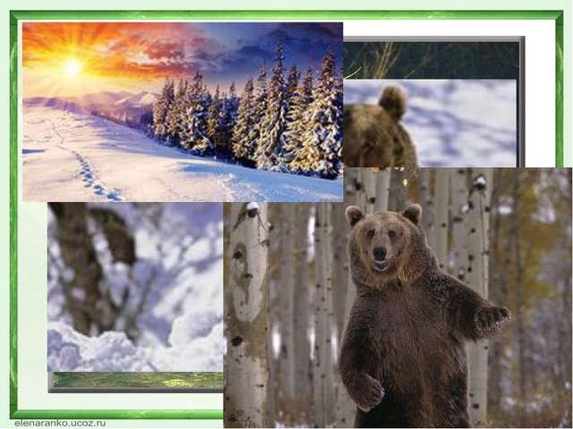 Небо солнышко деревья лес ребята весна муравьи птицы медвежонок Тимка почки п...