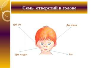 Семь отверстий в голове Два уха Два глаза Рот Две ноздри