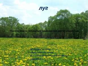 Участок земли, покрытый травянистой растительностью Презентацию составила: Уч