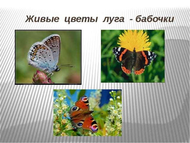 Живые цветы луга - бабочки