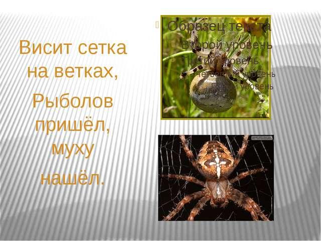 Висит сетка на ветках, Рыболов пришёл, муху нашёл.