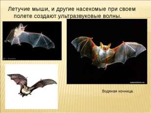 Летучие мыши, и другие насекомые при своем полете создают ультразвуковые волн