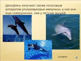 Дельфины излучают своим голосовым аппаратом ультразвуковые импульсы, у них о